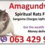 I have used money spell caster in uk Bedford, a sangoma with spiritual rats +27634299958