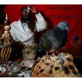 Black magic mantras expert +27789640870 uses ancient genies/jinns curse witchcraft specialist Kuwait, Netherlands, UAE