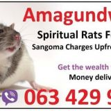 Powerful spiritual rats for money spell | USA | England +27634299958 baba messe